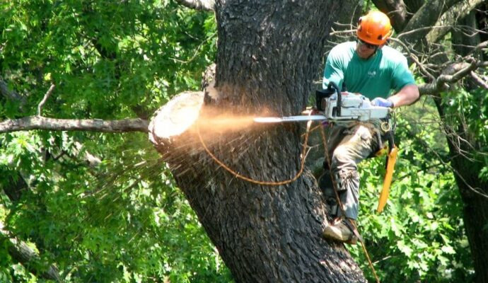 247 Tree Removal-San Diego Tree Trimming Pros & Tree Removal Services-We Offer Tree Trimming Services, Tree Removal, Tree Pruning, Tree Cutting, Residential and Commercial Tree Trimming Services, Storm Damage, Emergency Tree Removal, Land Clearing, Tree Companies, Tree Care Service, Stump Grinding, and we're the Best Tree Trimming Company Near You Guaranteed!