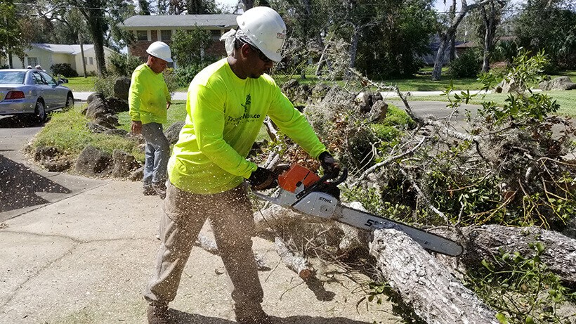 Carlsbad-San Diego Tree Trimming Pros & Tree Removal Services-We Offer Tree Trimming Services, Tree Removal, Tree Pruning, Tree Cutting, Residential and Commercial Tree Trimming Services, Storm Damage, Emergency Tree Removal, Land Clearing, Tree Companies, Tree Care Service, Stump Grinding, and we're the Best Tree Trimming Company Near You Guaranteed!