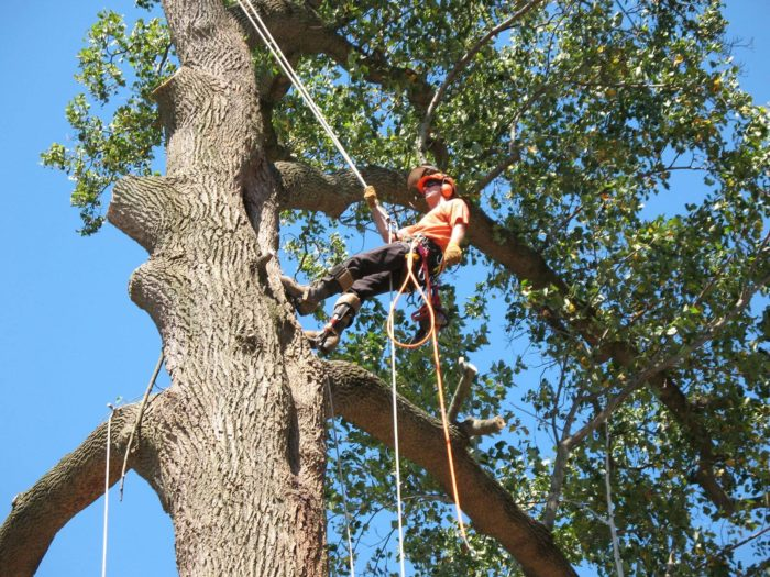 Contact Us-San Diego Tree Trimming Pros & Tree Removal Services
