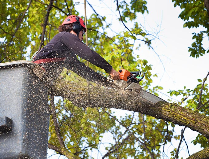 Coronado-San Diego Tree Trimming Pros & Tree Removal Services-We Offer Tree Trimming Services, Tree Removal, Tree Pruning, Tree Cutting, Residential and Commercial Tree Trimming Services, Storm Damage, Emergency Tree Removal, Land Clearing, Tree Companies, Tree Care Service, Stump Grinding, and we're the Best Tree Trimming Company Near You Guaranteed!
