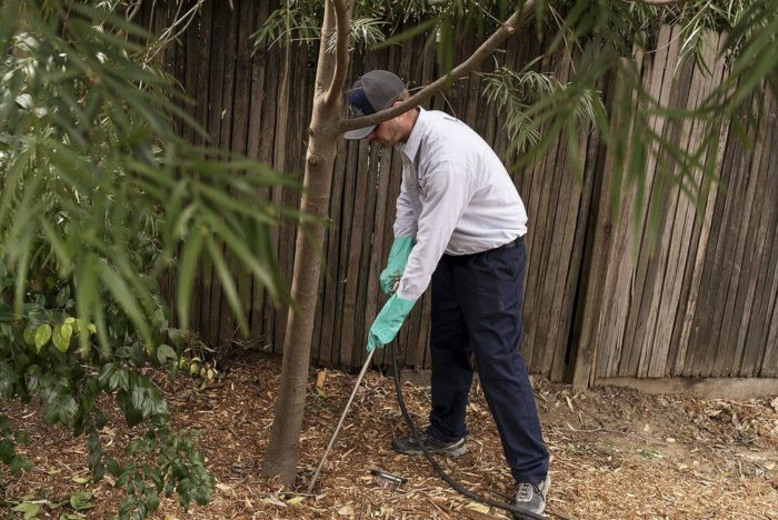 Deep Root Injection-San Diego Tree Trimming Pros & Tree Removal Services-We Offer Tree Trimming Services, Tree Removal, Tree Pruning, Tree Cutting, Residential and Commercial Tree Trimming Services, Storm Damage, Emergency Tree Removal, Land Clearing, Tree Companies, Tree Care Service, Stump Grinding, and we're the Best Tree Trimming Company Near You Guaranteed!