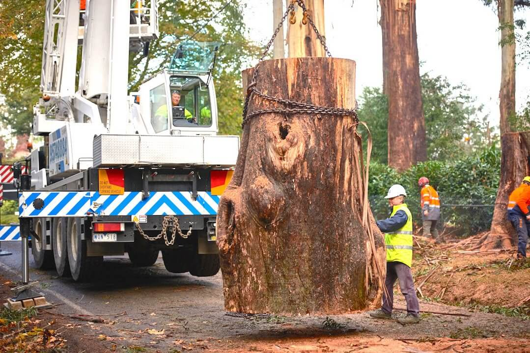 Del Mar-San Diego Tree Trimming Pros & Tree Removal Services-We Offer Tree Trimming Services, Tree Removal, Tree Pruning, Tree Cutting, Residential and Commercial Tree Trimming Services, Storm Damage, Emergency Tree Removal, Land Clearing, Tree Companies, Tree Care Service, Stump Grinding, and we're the Best Tree Trimming Company Near You Guaranteed!