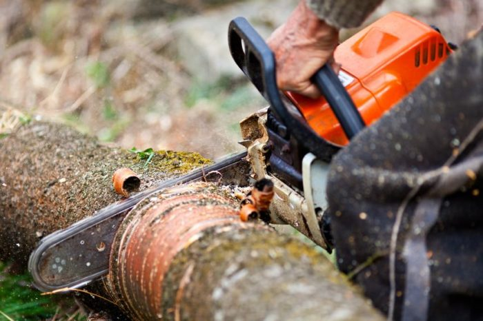 El Cajon-San Diego Tree Trimming Pros & Tree Removal Services-We Offer Tree Trimming Services, Tree Removal, Tree Pruning, Tree Cutting, Residential and Commercial Tree Trimming Services, Storm Damage, Emergency Tree Removal, Land Clearing, Tree Companies, Tree Care Service, Stump Grinding, and we're the Best Tree Trimming Company Near You Guaranteed!