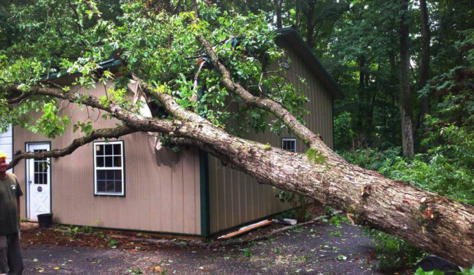 Emergency Tree Trimming & Tree Removal Services-San Diego Tree Trimming Pros & Tree Removal Services-We Offer Tree Trimming Services, Tree Removal, Tree Pruning, Tree Cutting, Residential and Commercial Tree Trimming Services, Storm Damage, Emergency Tree Removal, Land Clearing, Tree Companies, Tree Care Service, Stump Grinding, and we're the Best Tree Trimming Company Near You Guaranteed!