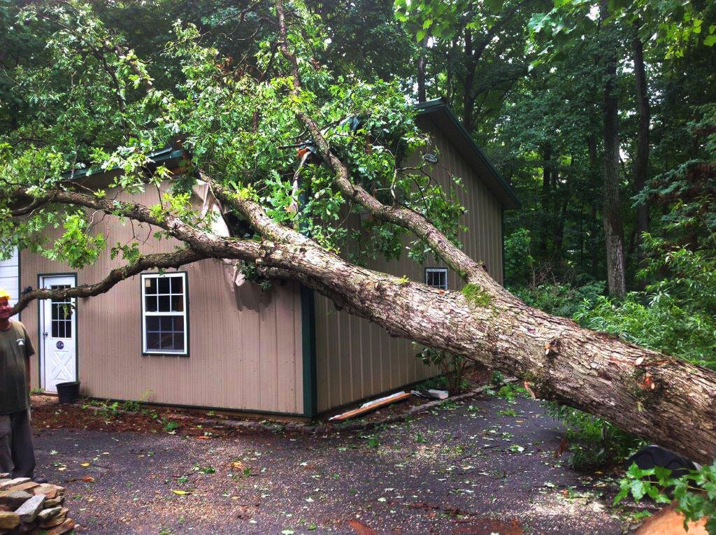 Emergency Tree Trimming & Tree Removal Services