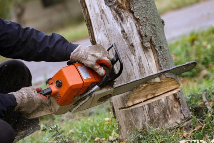 Encinitas-San Diego Tree Trimming Pros & Tree Removal Services-We Offer Tree Trimming Services, Tree Removal, Tree Pruning, Tree Cutting, Residential and Commercial Tree Trimming Services, Storm Damage, Emergency Tree Removal, Land Clearing, Tree Companies, Tree Care Service, Stump Grinding, and we're the Best Tree Trimming Company Near You Guaranteed!