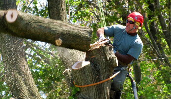 HOME PAGE-San Diego Tree Trimming Pros & Tree Removal Services-We Offer Tree Trimming Services, Tree Removal, Tree Pruning, Tree Cutting, Residential and Commercial Tree Trimming Services, Storm Damage, Emergency Tree Removal, Land Clearing, Tree Companies, Tree Care Service, Stump Grinding, and we're the Best Tree Trimming Company Near You Guaranteed!