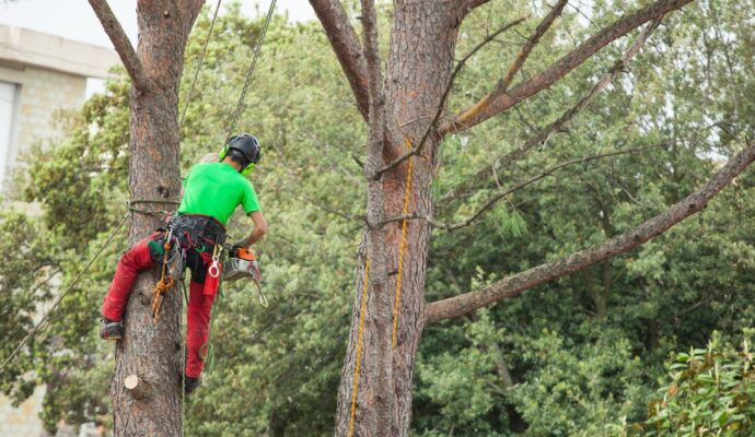 Lemon Grove-San Diego Tree Trimming Pros & Tree Removal Services-We Offer Tree Trimming Services, Tree Removal, Tree Pruning, Tree Cutting, Residential and Commercial Tree Trimming Services, Storm Damage, Emergency Tree Removal, Land Clearing, Tree Companies, Tree Care Service, Stump Grinding, and we're the Best Tree Trimming Company Near You Guaranteed!