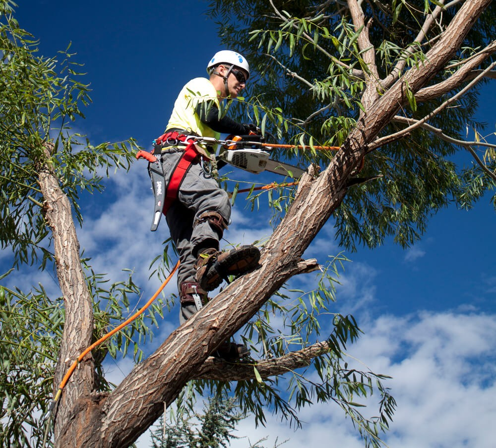 National City-San Diego Tree Trimming Pros & Tree Removal Services-We Offer Tree Trimming Services, Tree Removal, Tree Pruning, Tree Cutting, Residential and Commercial Tree Trimming Services, Storm Damage, Emergency Tree Removal, Land Clearing, Tree Companies, Tree Care Service, Stump Grinding, and we're the Best Tree Trimming Company Near You Guaranteed!