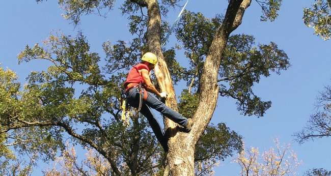 Oceanside-San Diego Tree Trimming Pros & Tree Removal Services-We Offer Tree Trimming Services, Tree Removal, Tree Pruning, Tree Cutting, Residential and Commercial Tree Trimming Services, Storm Damage, Emergency Tree Removal, Land Clearing, Tree Companies, Tree Care Service, Stump Grinding, and we're the Best Tree Trimming Company Near You Guaranteed!