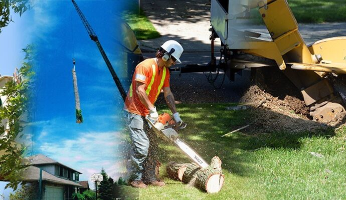 Poway-San Diego Tree Trimming Pros & Tree Removal Services-We Offer Tree Trimming Services, Tree Removal, Tree Pruning, Tree Cutting, Residential and Commercial Tree Trimming Services, Storm Damage, Emergency Tree Removal, Land Clearing, Tree Companies, Tree Care Service, Stump Grinding, and we're the Best Tree Trimming Company Near You Guaranteed!