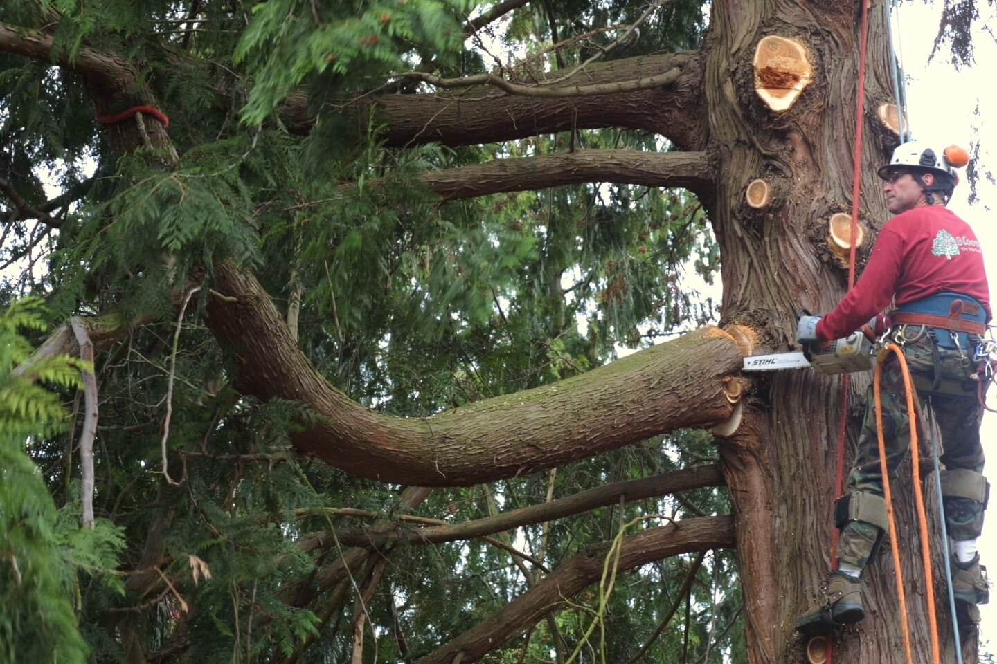 Residential Tree Trimming Services-San Diego Tree Trimming Pros & Tree Removal Services-We Offer Tree Trimming Services, Tree Removal, Tree Pruning, Tree Cutting, Residential and Commercial Tree Trimming Services, Storm Damage, Emergency Tree Removal, Land Clearing, Tree Companies, Tree Care Service, Stump Grinding, and we're the Best Tree Trimming Company Near You Guaranteed!