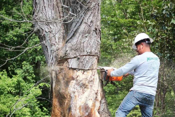 San Diego-San Diego Tree Trimming Pros & Tree Removal Services-We Offer Tree Trimming Services, Tree Removal, Tree Pruning, Tree Cutting, Residential and Commercial Tree Trimming Services, Storm Damage, Emergency Tree Removal, Land Clearing, Tree Companies, Tree Care Service, Stump Grinding, and we're the Best Tree Trimming Company Near You Guaranteed!