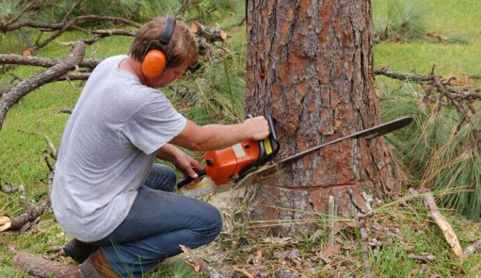 San Marcos-San Diego Tree Trimming Pros & Tree Removal Services-We Offer Tree Trimming Services, Tree Removal, Tree Pruning, Tree Cutting, Residential and Commercial Tree Trimming Services, Storm Damage, Emergency Tree Removal, Land Clearing, Tree Companies, Tree Care Service, Stump Grinding, and we're the Best Tree Trimming Company Near You Guaranteed!
