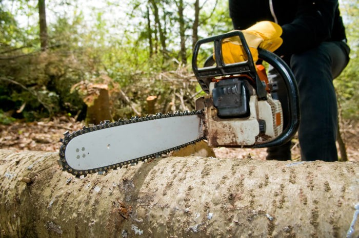 Santee-San Diego Tree Trimming Pros & Tree Removal Services-We Offer Tree Trimming Services, Tree Removal, Tree Pruning, Tree Cutting, Residential and Commercial Tree Trimming Services, Storm Damage, Emergency Tree Removal, Land Clearing, Tree Companies, Tree Care Service, Stump Grinding, and we're the Best Tree Trimming Company Near You Guaranteed!