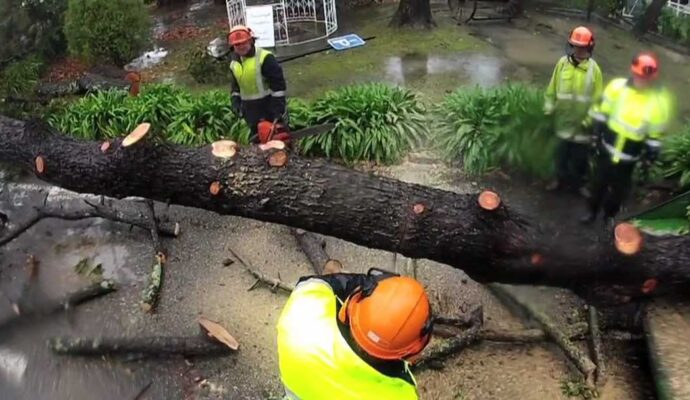 Solana Beach-San Diego Tree Trimming Pros & Tree Removal Services-We Offer Tree Trimming Services, Tree Removal, Tree Pruning, Tree Cutting, Residential and Commercial Tree Trimming Services, Storm Damage, Emergency Tree Removal, Land Clearing, Tree Companies, Tree Care Service, Stump Grinding, and we're the Best Tree Trimming Company Near You Guaranteed!