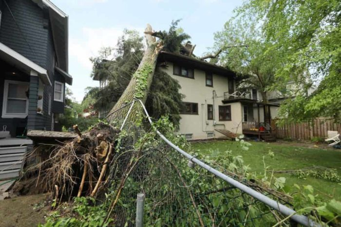 Storm Damage-San Diego Tree Trimming Pros & Tree Removal Services-We Offer Tree Trimming Services, Tree Removal, Tree Pruning, Tree Cutting, Residential and Commercial Tree Trimming Services, Storm Damage, Emergency Tree Removal, Land Clearing, Tree Companies, Tree Care Service, Stump Grinding, and we're the Best Tree Trimming Company Near You Guaranteed!