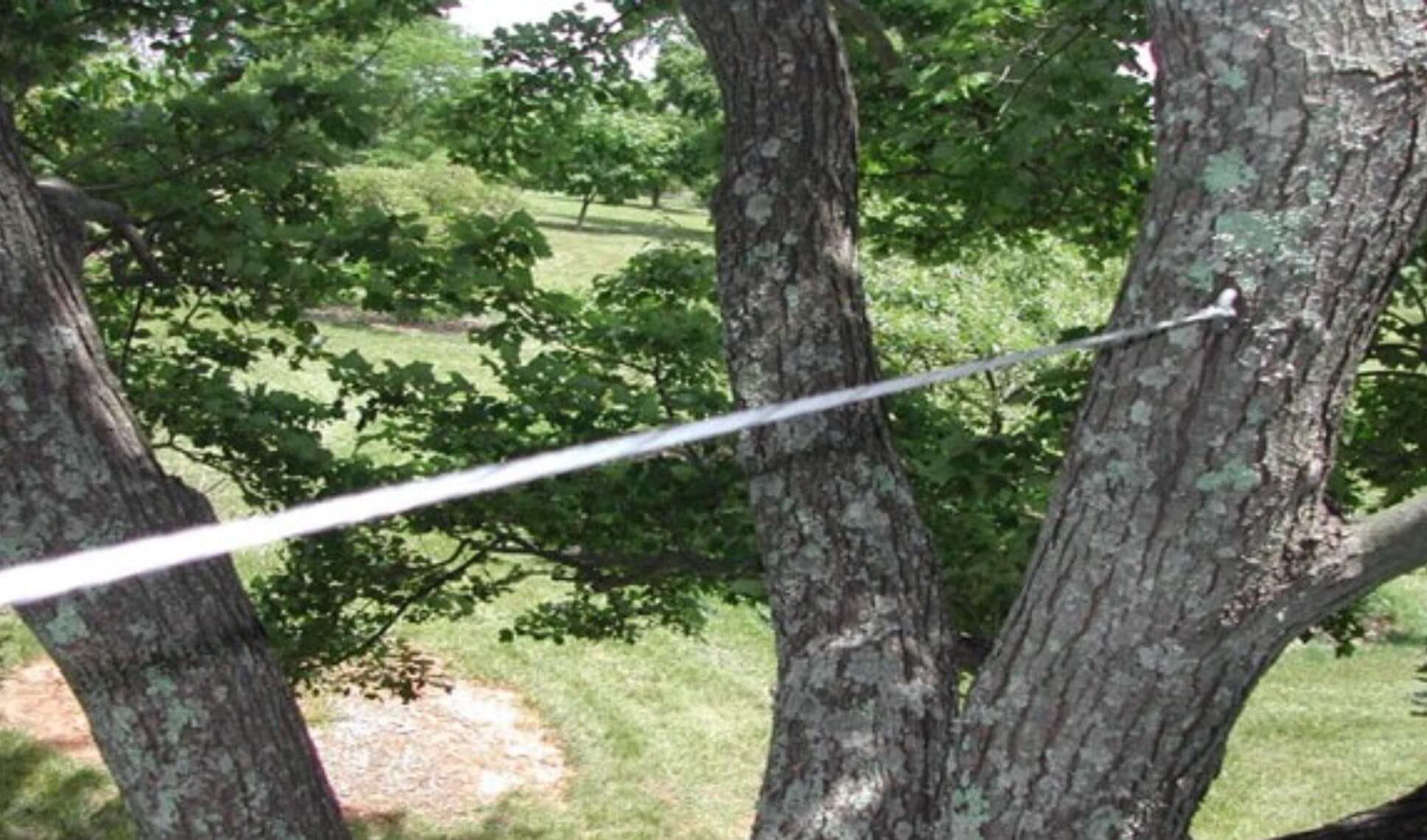 Tree Bracing & Tree Cabling- San Diego Tree Trimming Pros & Tree Removal Services-We Offer Tree Trimming Services, Tree Removal, Tree Pruning, Tree Cutting, Residential and Commercial Tree Trimming Services, Storm Damage, Emergency Tree Removal, Land Clearing, Tree Companies, Tree Care Service, Stump Grinding, and we're the Best Tree Trimming Company Near You Guaranteed!
