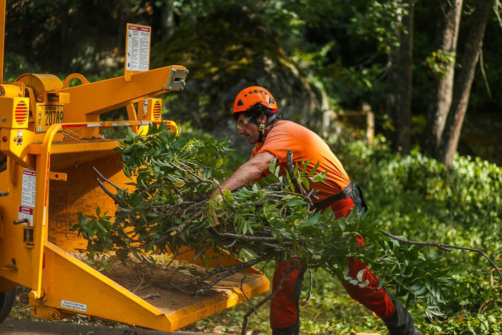 Tree Care & Tree Doctor-San Diego Tree Trimming Pros & Tree Removal Services-We Offer Tree Trimming Services, Tree Removal, Tree Pruning, Tree Cutting, Residential and Commercial Tree Trimming Services, Storm Damage, Emergency Tree Removal, Land Clearing, Tree Companies, Tree Care Service, Stump Grinding, and we're the Best Tree Trimming Company Near You Guaranteed!