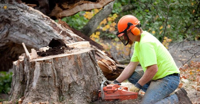 Tree Removal-San Diego Tree Trimming Pros & Tree Removal Services-We Offer Tree Trimming Services, Tree Removal, Tree Pruning, Tree Cutting, Residential and Commercial Tree Trimming Services, Storm Damage, Emergency Tree Removal, Land Clearing, Tree Companies, Tree Care Service, Stump Grinding, and we're the Best Tree Trimming Company Near You Guaranteed!