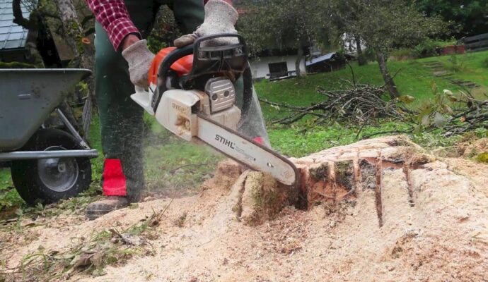 Tree Stump Removal Services-San Diego Tree Trimming Pros & Tree Removal Services-We Offer Tree Trimming Services, Tree Removal, Tree Pruning, Tree Cutting, Residential and Commercial Tree Trimming Services, Storm Damage, Emergency Tree Removal, Land Clearing, Tree Companies, Tree Care Service, Stump Grinding, and we're the Best Tree Trimming Company Near You Guaranteed!