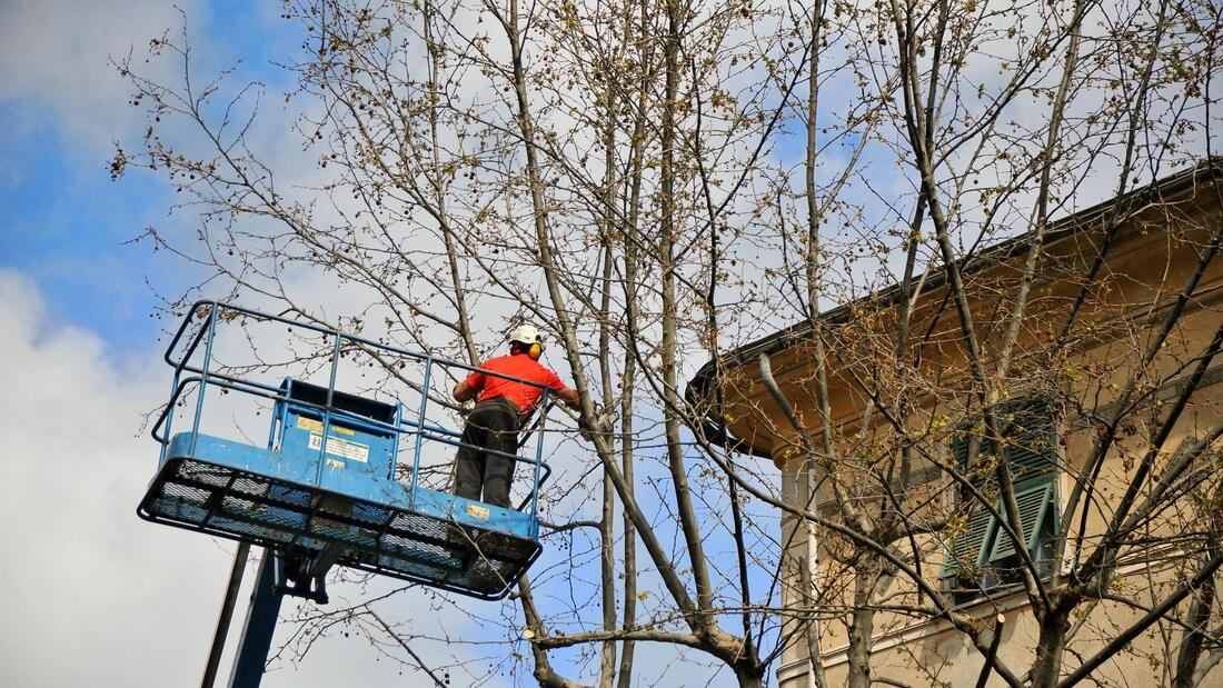 Tree Trimming & Cutting-San Diego Tree Trimming Pros & Tree Removal Services-We Offer Tree Trimming Services, Tree Removal, Tree Pruning, Tree Cutting, Residential and Commercial Tree Trimming Services, Storm Damage, Emergency Tree Removal, Land Clearing, Tree Companies, Tree Care Service, Stump Grinding, and we're the Best Tree Trimming Company Near You Guaranteed!