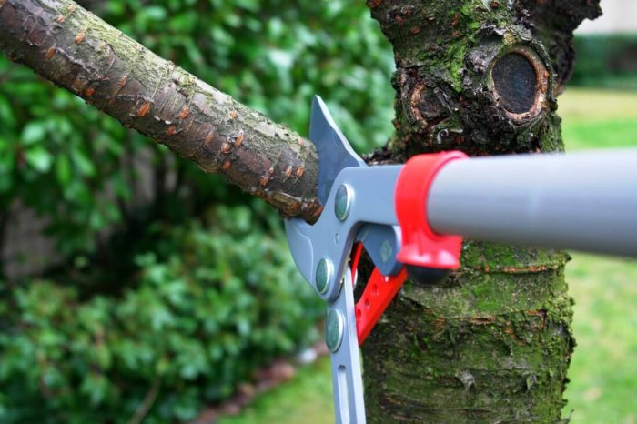 Tree Trimming Removal-San Diego Tree Trimming Pros & Tree Removal Services-We Offer Tree Trimming Services, Tree Removal, Tree Pruning, Tree Cutting, Residential and Commercial Tree Trimming Services, Storm Damage, Emergency Tree Removal, Land Clearing, Tree Companies, Tree Care Service, Stump Grinding, and we're the Best Tree Trimming Company Near You Guaranteed!