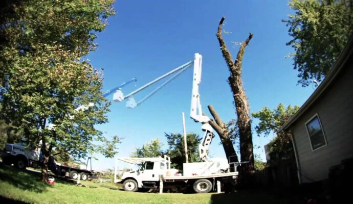 Vista-San Diego Tree Trimming Pros & Tree Removal Services-We Offer Tree Trimming Services, Tree Removal, Tree Pruning, Tree Cutting, Residential and Commercial Tree Trimming Services, Storm Damage, Emergency Tree Removal, Land Clearing, Tree Companies, Tree Care Service, Stump Grinding, and we're the Best Tree Trimming Company Near You Guaranteed!